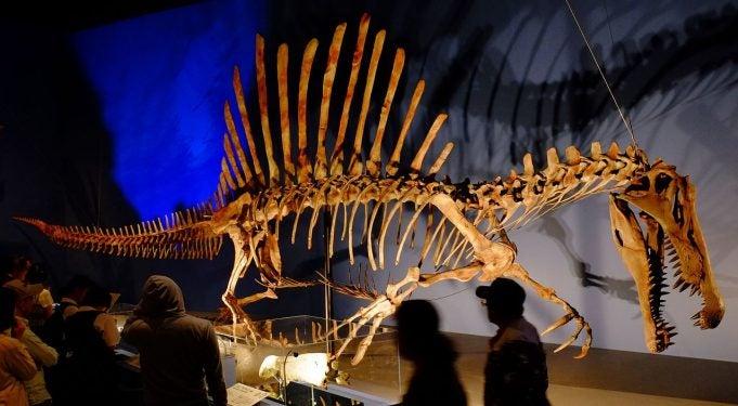 FAS'TA FOSİL KEŞFİ Spinosaurus